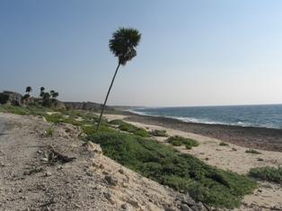 Национальный парк на Кубе (февраль)
